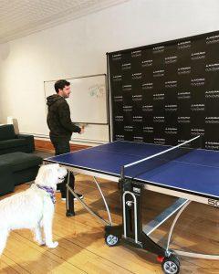 """Dog Maddy """"ruffereeing"""" a ping pong match!"""