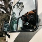 Trekkers In Training - Boxer Dogs